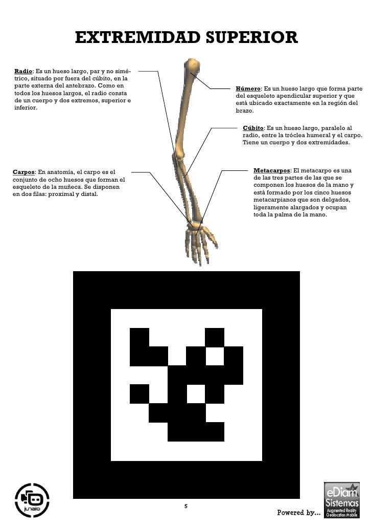 Excelente Hoja De Cálculo Anatomía Rata Molde - Anatomía de Las ...