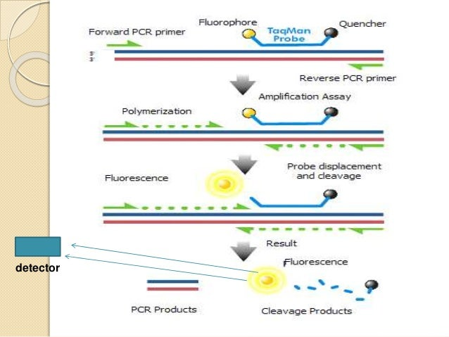 real time-PCR..