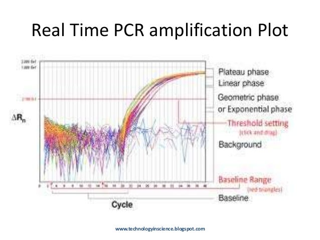 Resolving Poor PCR assay Efficiency in Real Time PCR