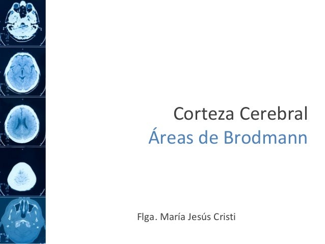 Corteza Cerebral Áreas de Brodmann Flga. María Jesús Cristi