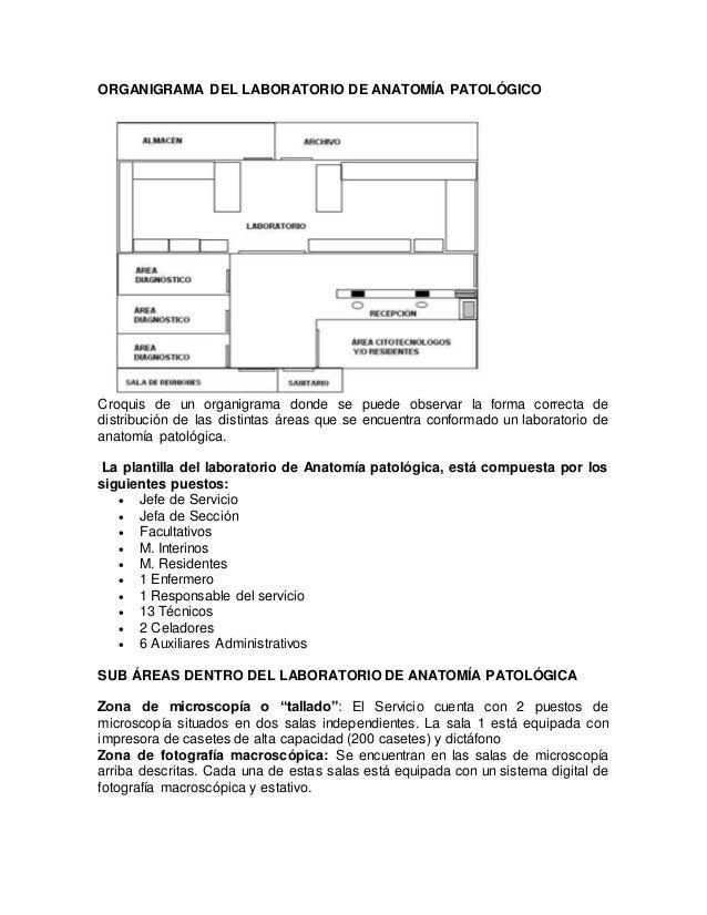 Atractivo Subglótica área De Anatomía Festooning - Imágenes de ...