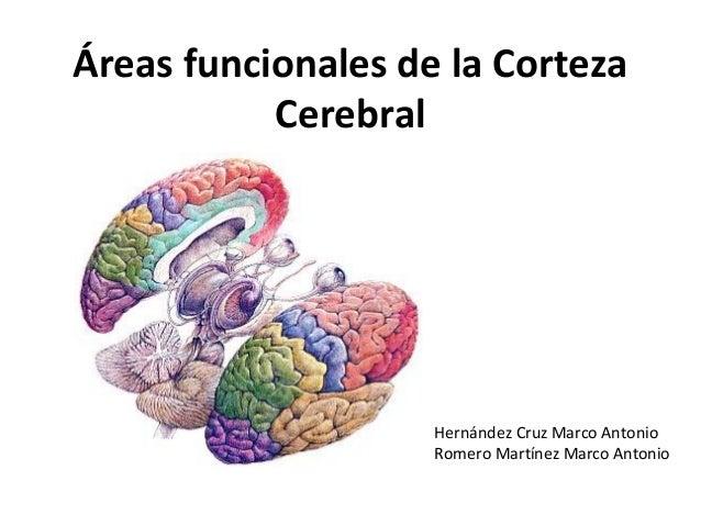 Áreas funcionales de la Corteza Cerebral Hernández Cruz Marco Antonio Romero Martínez Marco Antonio