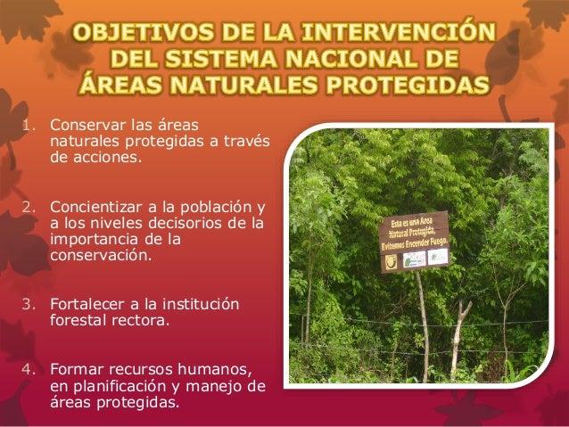 Areas naturales protegidas de el salvador - Ambientadores naturales para la casa ...
