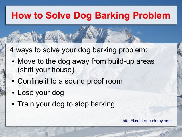 11 Reasons Why Your Dog Barks