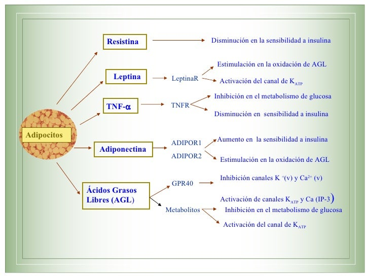 Citocinas proinflamatorias y su contribución a la