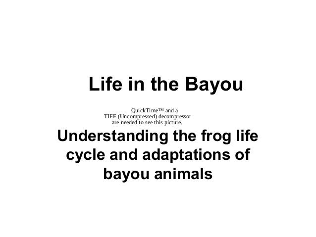 QuickTime™ and a TIFF (Uncompressed) decompressor are needed to see this picture. Life in the Bayou Understanding the frog...