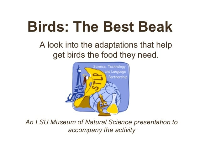 Birds: The Best Beak A look into the adaptations that help get birds the food they need. An LSU Museum of Natural Science ...