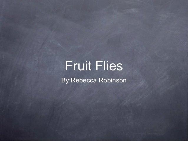 Fruit Flies By:Rebecca Robinson
