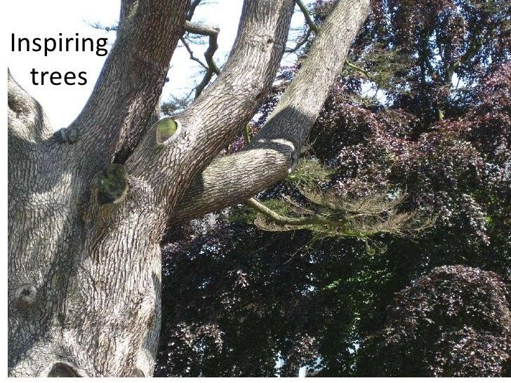 Inspiring trees<br />