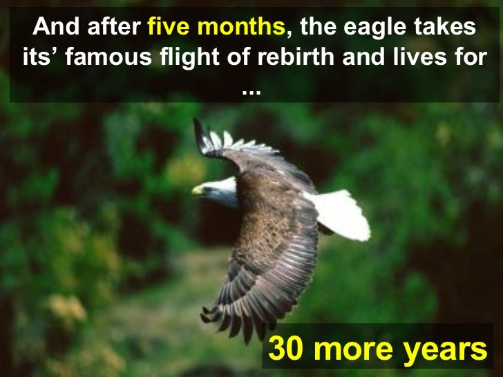 30 more  years And after  five months , the eagle takes its' famous flight of rebirth and lives for ...   30 more  years .