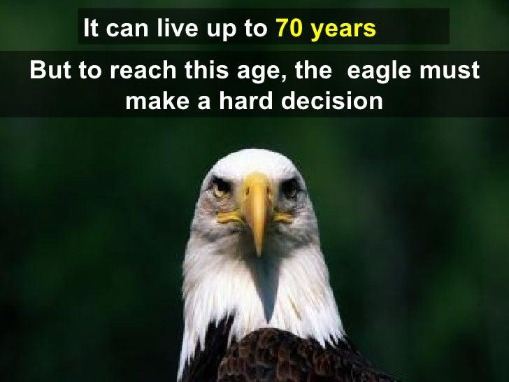Rebirthofan Eagle Slide 3