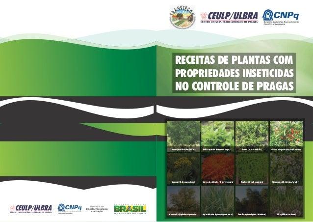 RECEITAS DE PLANTAS COM       PROPRIEDADES INSETICIDAS       NO CONTROLE DE PRAGAS   Neem (Azabirachta indica)       Falso...