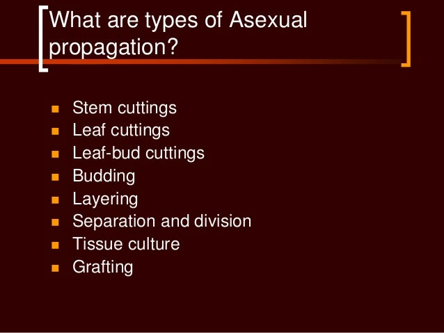 Asexual propagation of horticultural crops research