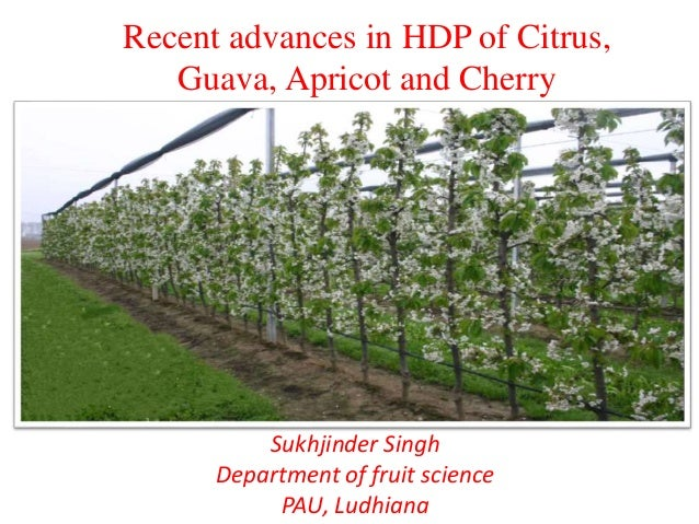Recent advances in hdp of citrus, guava, apricot and cherry