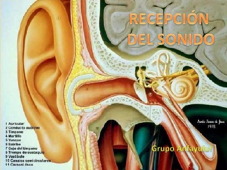 RECEPCIÓN <br />DEL SONIDO<br />Grupo Anfayulu!<br />