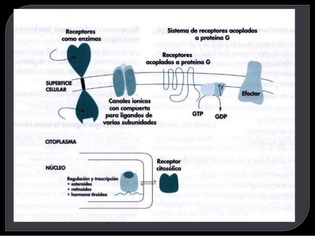 Receptores Farmacologia Slide 3