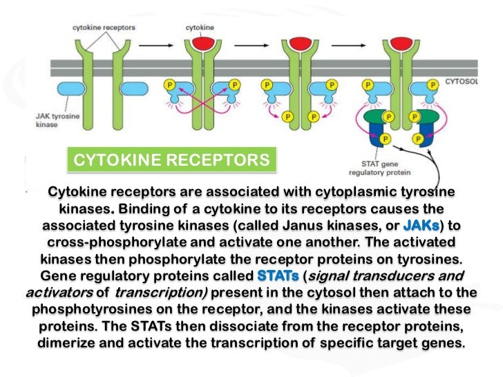 Receptors and signal transduction
