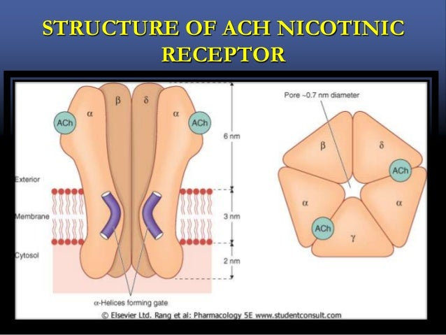 STRUCTURE OF ACH NICOTINIC RECEPTOR