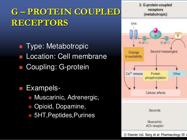 G – PROTEIN COUPLED RECEPTORS  Type: Metabotropic  Location: Cell membrane  Coupling: G-protein  Exampels-  Muscarini...