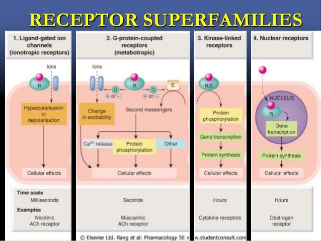 MECHANISMS  Loss or change in receptors  Exhaustion of mediators   metabolic degradation  Physiological adaptation  ...