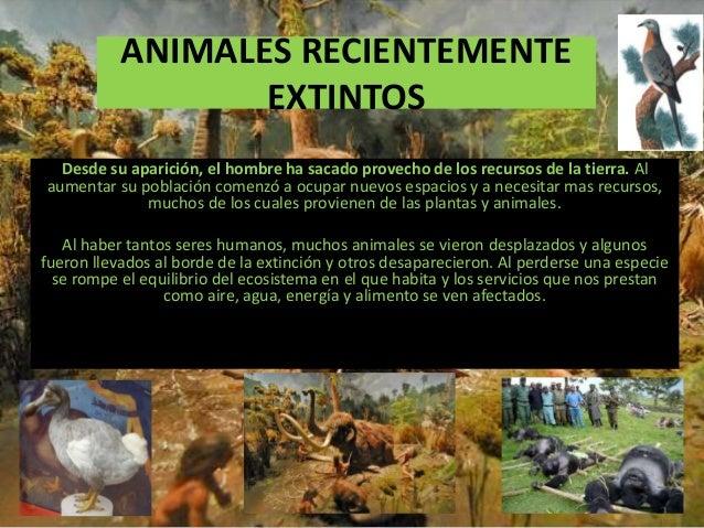 ANIMALES RECIENTEMENTE EXTINTOS Desde su aparición, el hombre ha sacado provecho de los recursos de la tierra. Al aumentar...