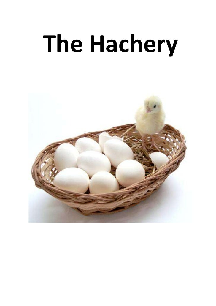 The Hachery