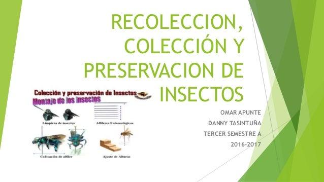 RECOLECCION, COLECCIÓN Y PRESERVACION DE INSECTOS OMAR APUNTE DANNY TASINTUÑA TERCER SEMESTRE A 2016-2017