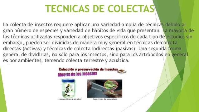 TECNICAS DE COLECTAS La colecta de insectos requiere aplicar una variedad amplia de técnicas debido al gran número de espe...