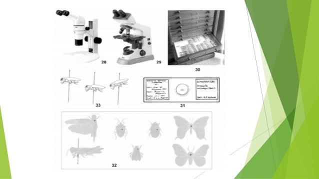 Montaje Según Orden  Orden Coleóptera  mariquita, el escarabajo de la patata o los escarabajos peloteros.