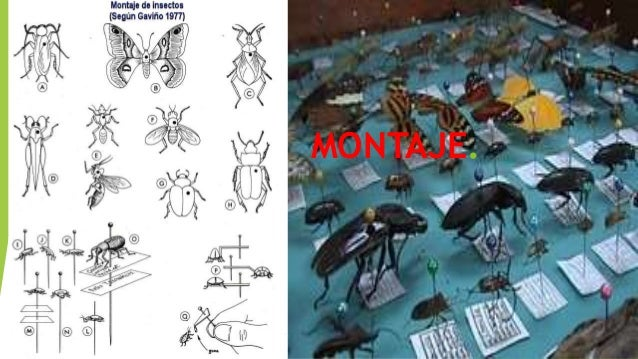 Orden Diftera.  moscas, mosquitos, tábanos, típulas