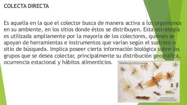 COLECTA DIRECTA Es aquella en la que el colector busca de manera activa a los organismos en su ambiente, en los sitios don...