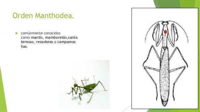 Recoleccion, colección y preservacion de insectos
