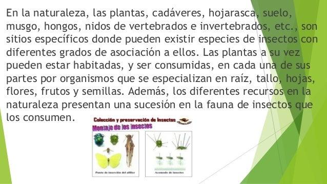En la naturaleza, las plantas, cadáveres, hojarasca, suelo, musgo, hongos, nidos de vertebrados e invertebrados, etc., son...