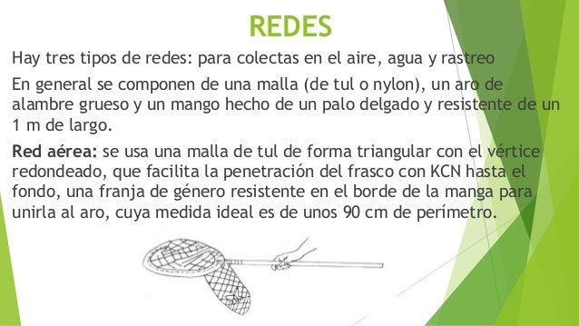 Red de rastreo: el aro es más pequeño (diámetro más o menos de 10 cm.) . la malla de un género más grueso y el mango más c...