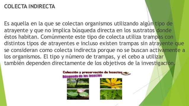 METODOS PARA SACRIFICAR A LOS INSECTOS EN EL CAMPO Las formas de sacrificar a los insectos en el campo, en el momento de s...