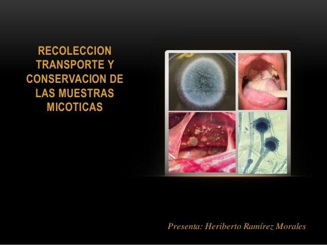 RECOLECCIONTRANSPORTE YCONSERVACION DELAS MUESTRASMICOTICASPresenta: Heriberto Ramírez Morales