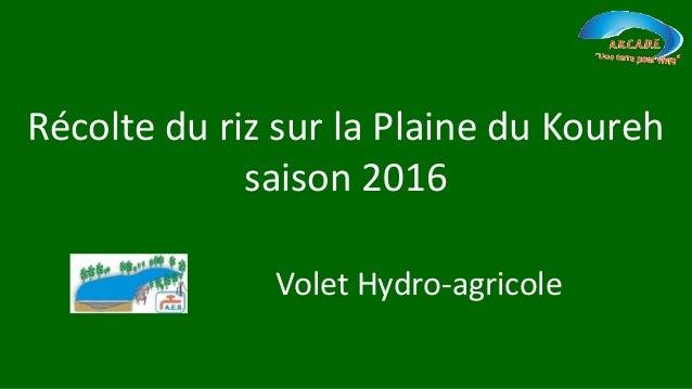 Récolte du riz sur la Plaine du Koureh saison 2016 Volet Hydro-agricole