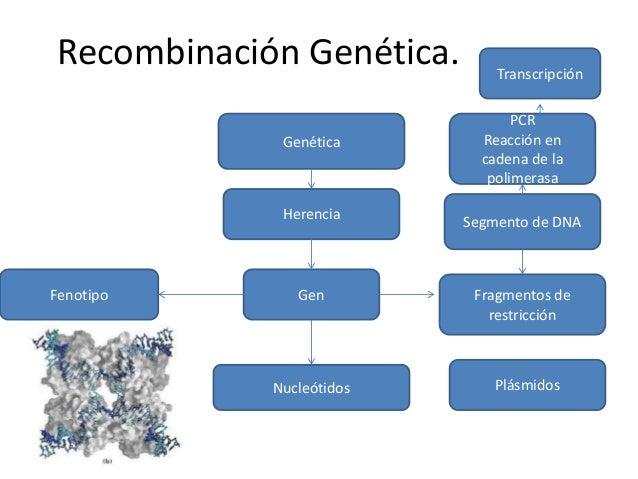 Recombinacion genética 7 0.