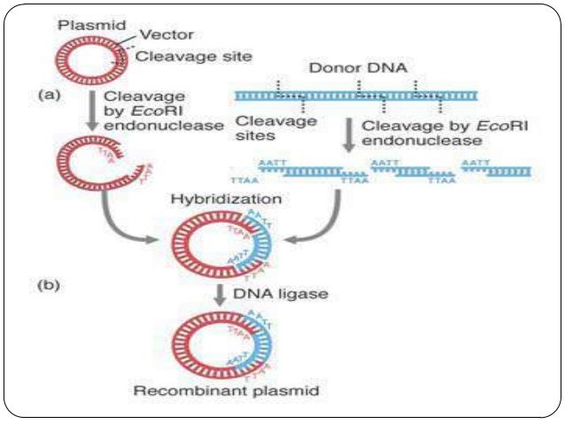 Recombinant dna technology by 269