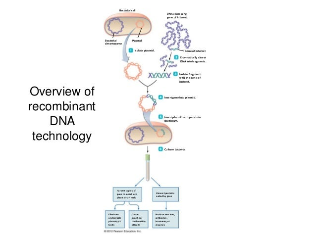 recombinant dna technology 3 638