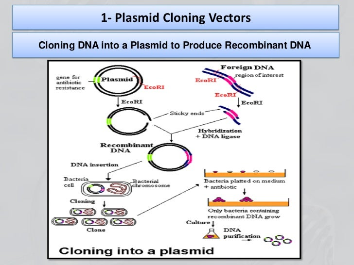 technology of recombinant dna The recombinant dna technology or dna cloning permits the isolation, amplification, and precise manipulation of specific dna fragments this is generally accomplished by linking or recombining the desired dna fragment with a dna molecule, termed the vector, which is capable of directing the replication of itself in a.