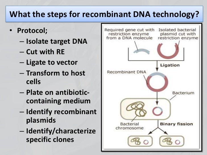 subcloning for recombinant dna Recombinant protein is a protein encoded by a gene — recombinant dna — that has been cloned in a system that supports expression of the gene and translation of messenger rna (see expression system) modification of the gene by recombinant dna technology can lead to.
