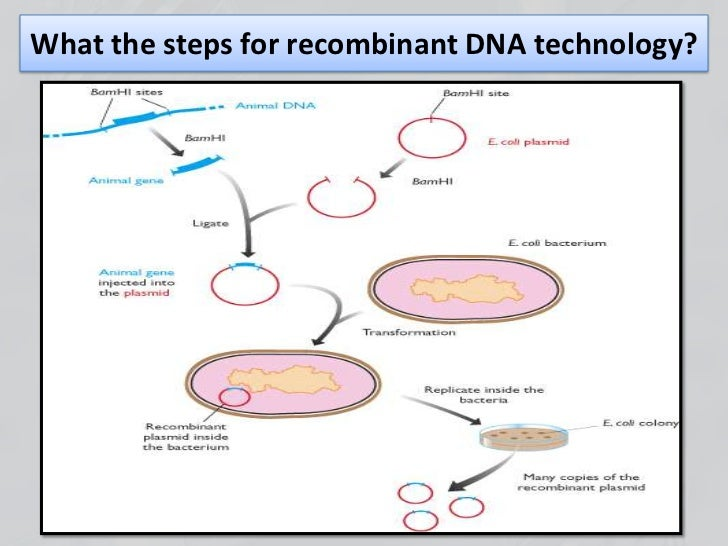 Recombinant dna technology.pptx mona