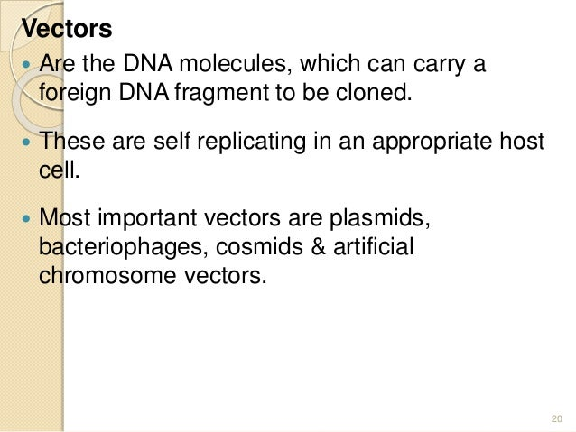 recombinant dna worksheet Termolak – Dna Technology Worksheet