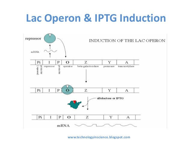 IPTG Induction Theory