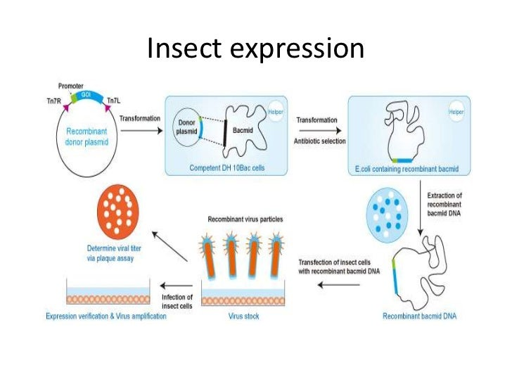 Recombinant protein expression seminar paper