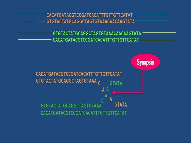 • GENE CONVERSION / NON-RECIPROCAL RECOMBINATION: one way transfer of genetic information, resulting in an allele of a gen...