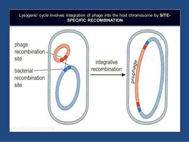 Models For Homologous Recombination