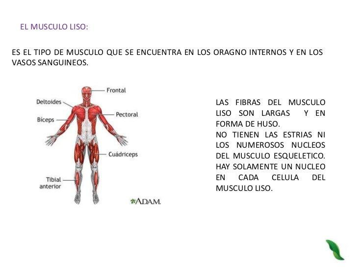 Reconoce la importancia y funcion del sistema muscular