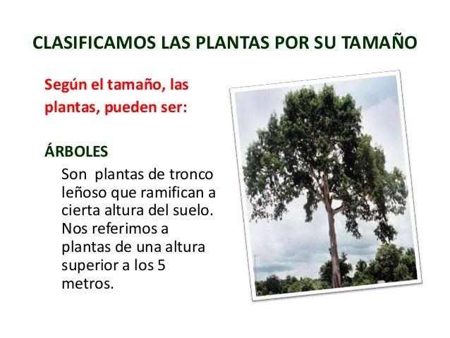 Reconociendo las plantas y sus partes modulo ii for Las caracteristicas de los arboles